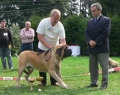 bob-anglicky-mastiff