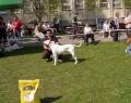SV-2009_argent-cajc-dog