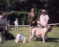 mastiff-kv02