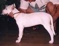 mlade-2002