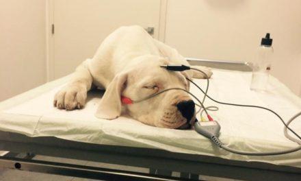 Nová BAER test klinika – zľava pre členov